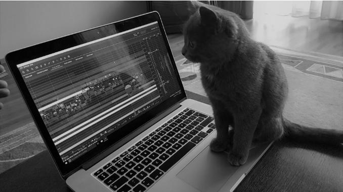 bookmap cat